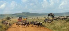 Travel far from the busy world we live in to the unspoiled natural beauty of Africa for an unforgettable luxury #AfricanSafari experience. http://www.gosheniadventures.com/all-african-safaris/