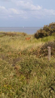 Bambi duinen