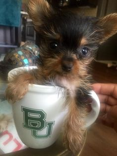 """""""Meet my newest family member. Her name is #Baylor."""" // An excellent name choice. #SicEm"""