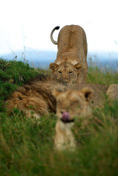 {<3} (Little Governors Camp, Kenya) | by Margot Raggett