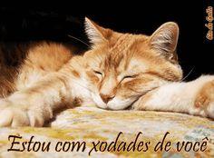 www.saudades de voce.com | mensagens de saudades - Estou com xodades de você