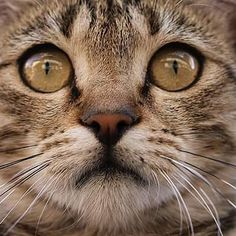 """35 Beğenme, 1 Yorum - Instagram'da Aykut Karahan (@aykutkarahanphotography): """"Photographer:aykut karahan #aykutkarahan  #photo #cat #cats  #animal #photography #catphotography"""""""