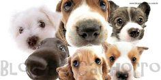 Como salvar um cachorro engasgado?