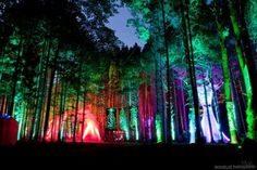 mMmMmm Electric Forest festival looks delicious (;