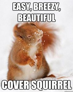 Easy, Breezy Snow Covered Squirrel