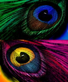 colorful feathers..