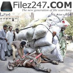Animal SLAVERY Must STOP..!!!   Its Against Islam..!