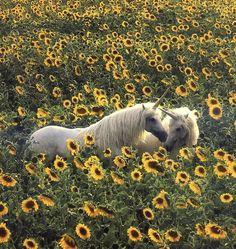 eenhoorn_foto_tussen_zonnebloemen.jpg (693×733)
