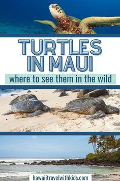Best Beaches In Maui, Maui Beach, Maui Hawaii, Oahu, Trip To Maui, Hawaii Vacation, Maui Holiday, Best Hawaiian Island, Maui Tours