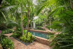 Key West Landscape Architecture: How to Design a Tropical Garden in South Florida - Rhapis humilis (slender lady palm) shields the pool and filters sunlight through its fronds.