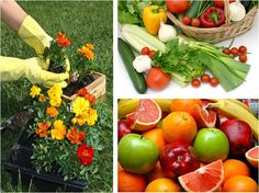 Organic Fruit Gardening . Gardening Tools, Organic Gardening, Organic Fruit, Fruit Garden, Vegetables, Flowers, How To Make, Food, Veggies