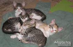 gatinhos bebés - Pesquisa do Google