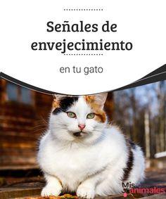 Señales de envejecimiento en tu gato  Aquí te contamos cuáles son las señales de envejecimiento en tu gato, para que puedas reconocer los indicios que te indicarán que tu gato se hace mayor. #vejez #gatos #salud #señales