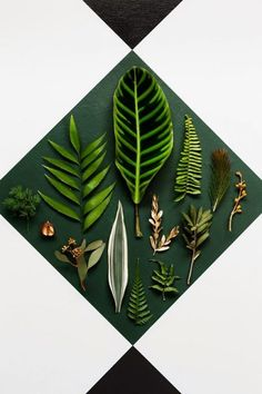 Interieur | Interieurtrends 2015 - Botanisch wonen • Stijlvol Styling - Woonblog