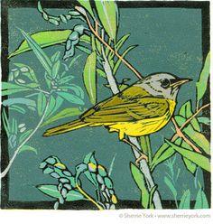 Sherrie York -Legacy (MacGillivray's warbler)