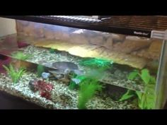 Cleans fish tanks and Ponds indoors and outdoors Young Teacher Outfits, Winter Teacher Outfits, Cleaning Fish, Fish Tanks, Ponds, Outdoors, Indoor, Interior, Aquariums