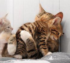 Diese Katzen.