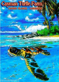 Turtle-Farm-Cayman-Islands-Caribbean-Island-Sea-Travel-Advertisement-Art-Poster