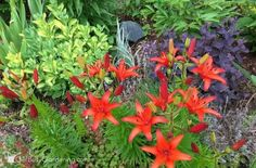Companion planting in the flower garden, great ideas, Dramatic perennial foliage color