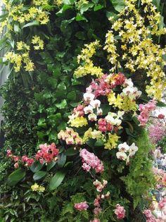 Jardim para local semi-sombreado, composto principalmente de epífitasFoto de Bosc d'Anjou