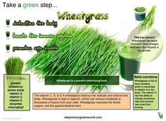 ☛ Wheatgrass is still the unsung hero, yet its benefits are many.  ✒ Share | Like | Re-pin | Comment      With 70% of Chlorophyll make up and amazing detoxifying properties,  wheatgrass is starting to draw some well deserved attention.  http://www.stepintomygreenworld.com/greenliving/greenfoods/the-health-scavenger-to-the-rescue-wheatgrass/