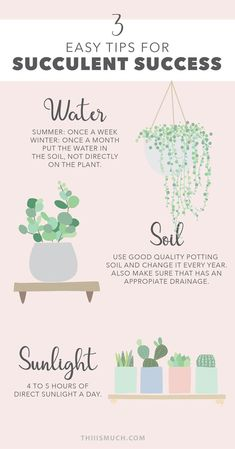 Succulent Care Discover 3 Easy Tips For Succulent Success Succulents and cactus are the best plants to have at home if youre a busy person. They dont need too much care and are very resistant. But they still need you to treat them carefully