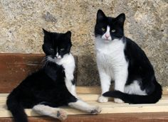 Do Cats Grieve For Lost Companions? | THE PUSSINGTON POST