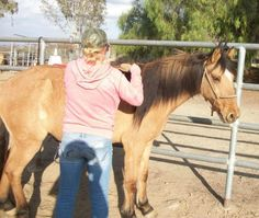 Stella - Dun w/ Blk Points  Mustang Mare in Murrieta, California 92564