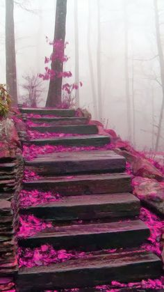 Mystical Stairs design Blue Ridge Mountains North Carolina