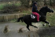 13.2hh Bay Gelding - 13.2hh Bay Gelding Harvey for Sale http://www.equineclassifieds.co.uk/Horse/132hh-bay-gelding-harvey-for-sale-listing-1045.aspx#.VCUl61cTCZY