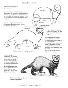 How to Draw Worksheets for The Young Artist: Printable How To Draw A Ferret Worksheet