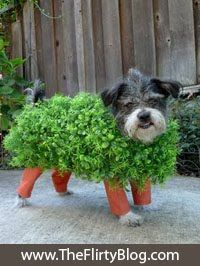 I Found The Place (Formerly The Flirty Blog): Chia Pet Kitai.... A Custom Halloween Dog Costume