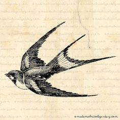 Flying Swallow, Bird - Digital Image Download for Iron on Transfer, Papercrafts, Pillows, T-Shirts, Tote Bags, Burlap, No 00919
