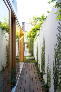 Planting For Side Yards With Narrow Timber Deck And Concrete Wall Climbing Plants Also Hardwood Frame Sliding Glass Door And Vines On Wall Design Ideas: Modern Minimalist Interiors, Bondi House by Fearns Studio Seiten Yards, Outdoor Spaces, Outdoor Living, Outdoor Fire, Ficus Pumila, Narrow Garden, Patio Interior, Outdoor Gardens, Landscape Design