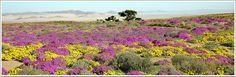 Klein-Aus Vista - Namiba: Gondwana Sperrgebiet Rand Park