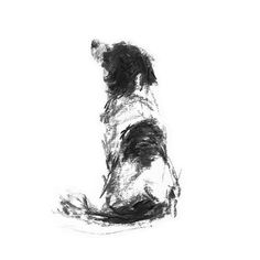 A little about the subject – Its a print of a simple, loose charcoal sketch of a Springer Spaniel. When I made prints fr Animal Sketches, Animal Drawings, Art Sketches, Art Drawings, Pencil Drawings, Drawing Faces, Dog Paintings, Original Paintings, Charcoal Sketch