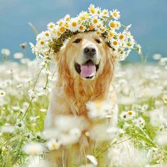 537 Best Dog Names Images Dogs Cute Dogs Dog Treats