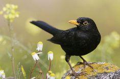 british bird flying - Google Search