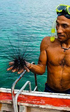 Seeigel Bangkok, Strand, Thailand, Swimwear, Sea Urchins, Bathing Suits, Swimsuits, Costumes, Swimsuit
