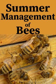 How to manage beehives during the warm summer months. A guide to everything you need for summer management of bees. Ideal for anyone who is interested in beekeeping. Backyard Beekeeping, Chickens Backyard, Raising Bees, Raising Chickens, Bee Hive Plans, Beekeeping For Beginners, Urban Chickens, Save The Bees, How To Keep Bees