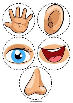 Five Senses Activity Printable Five Senses Activity For Preschool Students Teachersmag Com Five Senses Preschool, 5 Senses Activities, My Five Senses, Preschool Learning Activities, Preschool Printables, Kindergarten Worksheets, Preschool Activities, Kids Learning, All About Me Activities For Preschoolers