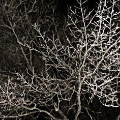 night.tree