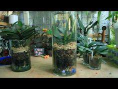 Орхидеи - выходцы из закрытой системы (неудачи, травмы)//посадка обратно - YouTube