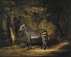 Zebra by George Stubbs (1763)