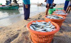 Peixes contaminados por mercúrio: ameaça ao ambiente e à saúde