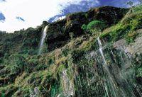 Cascada en el páramo de Chingaza, con profusión de musgos y hepáticas que cubren el talud.