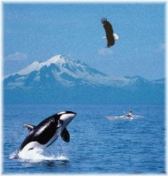 Puget Sound, WA - I'm pretty sure the Orca, kayaker and Eagle are all photoshopped in - BUT, you can see all THREE in Puget Sound!