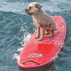 doggie enjoying a surf at the beach