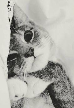 99 bottles of catnip on the wall,  99 bottles of catnip! Take one down…  pass it around… 99 bottles of… catnip…. ZzzZZzzzzzZ