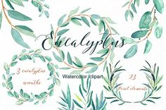 Eucalyptus. Watercolor clipart.